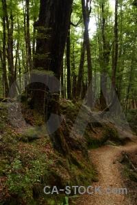 Tree forest lake sylvan trek new zealand root.