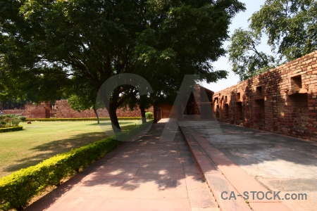 Tree garden agra india wall.