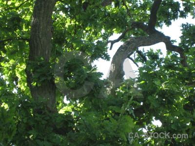 Tree green branch leaf.