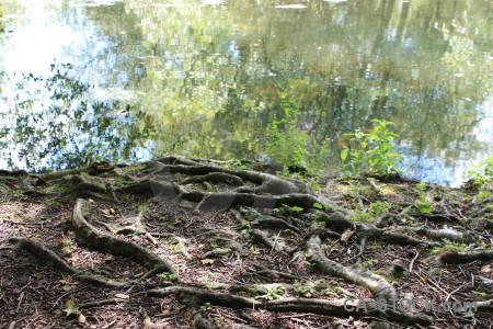 Tree green ground root.