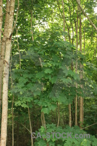 Tree green leaf.