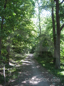 Tree green path.