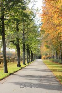 Tree green path orange yellow.