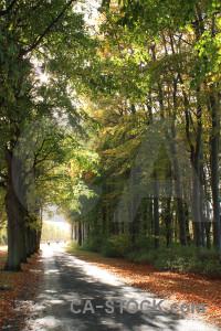 Tree green path yellow.
