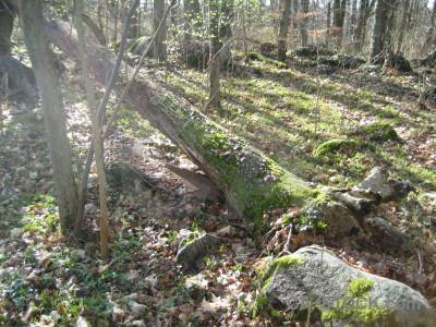 Tree green stump.