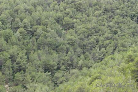 Tree green texture.