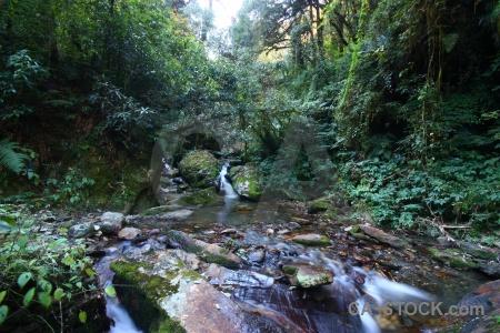 Tree himalayan annapurna sanctuary trek rock water.
