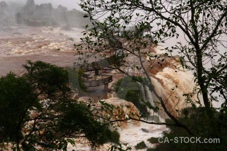 Tree iguassu falls iguacu south america spray.