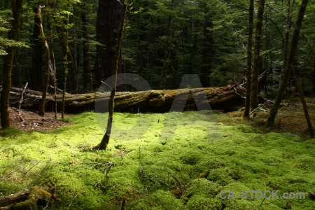 Tree lake sylvan trek plant branch forest.