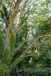 Tree leaf branch green.