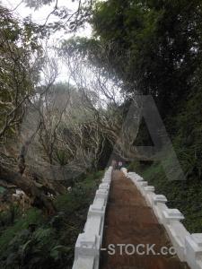 Tree luang prabang asia mount phousi laos.
