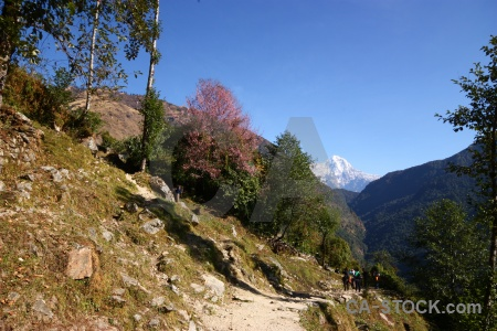 Tree nepal mountain path trek.