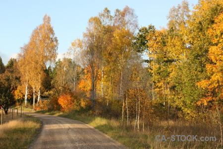 Tree orange yellow path brown.
