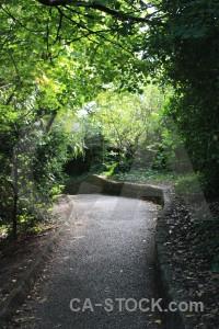 Tree path green.