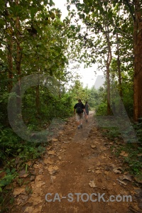 Tree path trek luang prabang southeast asia.