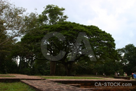 Tree prasat kravan khmer ruin cambodia.