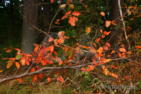 Tree red orange branch leaf.