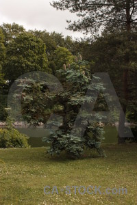Tree single.