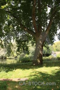 Tree single green.