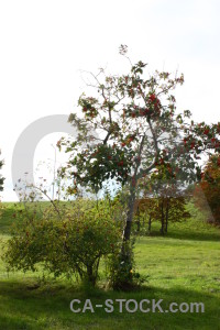 Tree single green white.