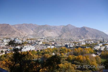 Tree sky china lhasa tibet.