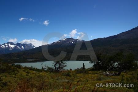 Tree sky circuit trek patagonia landscape.