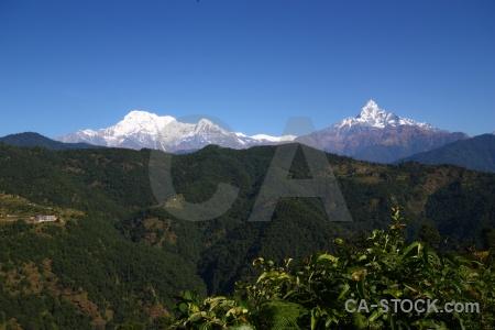 Tree snow asia nepal machhapuchchhre.