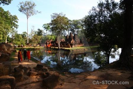 Tree southeast asia angkor temple stone.