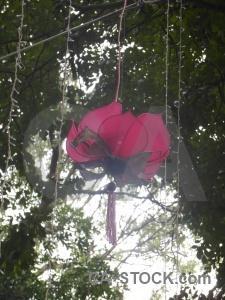 Tree southeast asia vietnam lantern hanoi.
