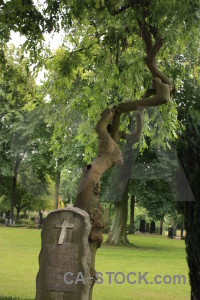 Tree statue single grave cemetery.