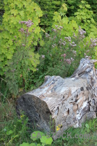 Tree stump green.