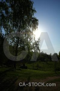 Tree sun sky europe sweden.