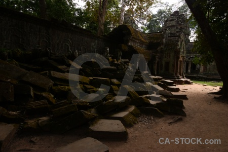 Tree ta prohm siem reap cambodia buddhist.
