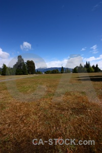 Tree te anau mountain field cloud.