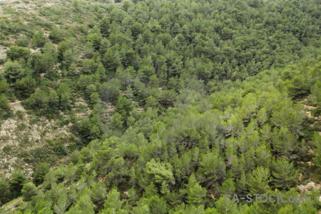 Tree texture green.
