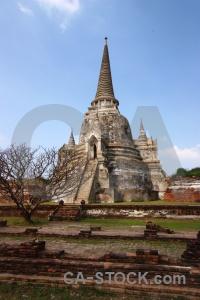 Tree thailand buddhist buddhism asia.