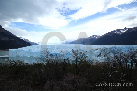 Tree water patagonia lake argentino ice.
