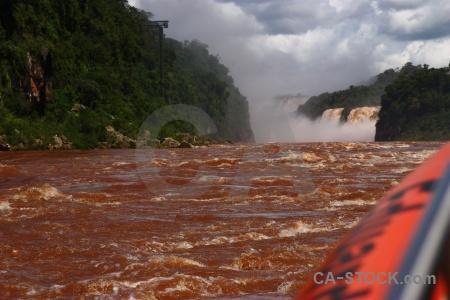 Tree water unesco iguassu falls argentina.
