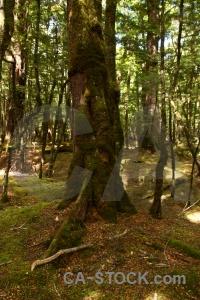 Trek plant forest lake sylvan trunk.