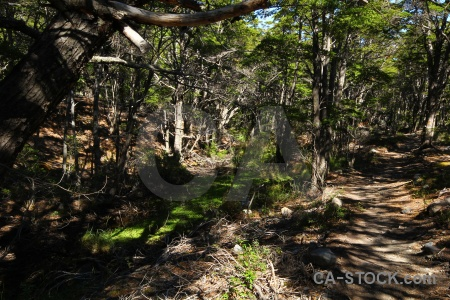 Trek south america patagonia chile tree.