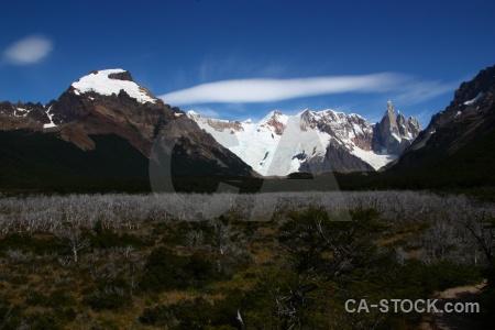 Trek tree sky southern patagonian ice field el chalten.