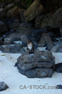 Tropical beach monkey southeast asia sand.
