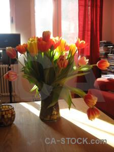 Tulip flower bouquet vase plant.