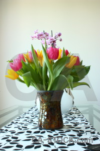 Tulip plant bouquet flower vase.