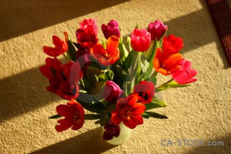 Tulip plant flower bouquet vase.
