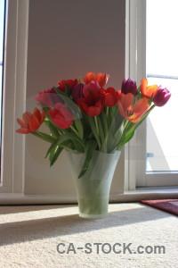 Tulip vase bouquet flower plant.