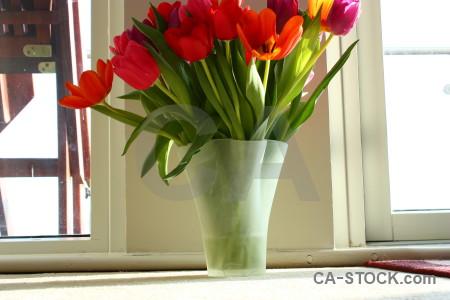 Tulip vase plant flower bouquet.
