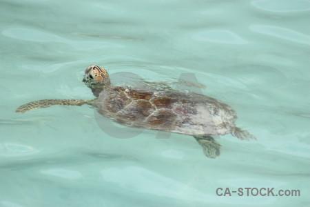Turtle animal.