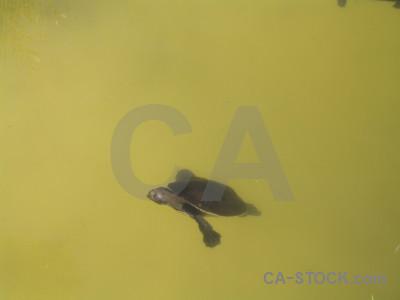 Turtle animal reptile.