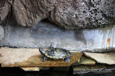 Turtle reptile animal.